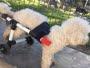 Tiene 19 años y con impresión 3D crea gratis sillas de ruedas para perros