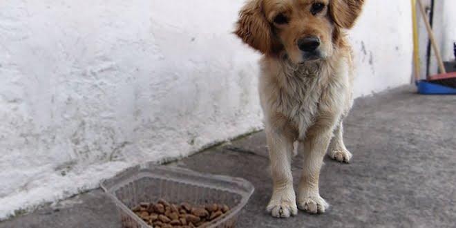 La opinión de la Sociedad Protectora de Animales debido a la alimentación de perros callejeros
