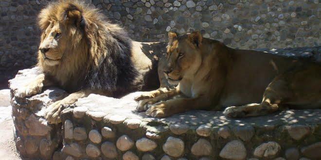 La Municipalidad de Córdoba dispuso un plan de intervención inmediata en el Zoológico