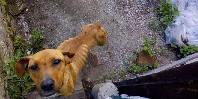 Arroyito: rescatan 11 perros en mal estado