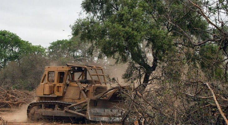 El desmonte ilegal arrasó con casi 5.000 hectáreas en 2020