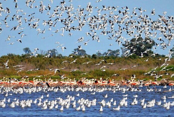Morteros nuevamente será subsede de la Feria de Aves Migratorias