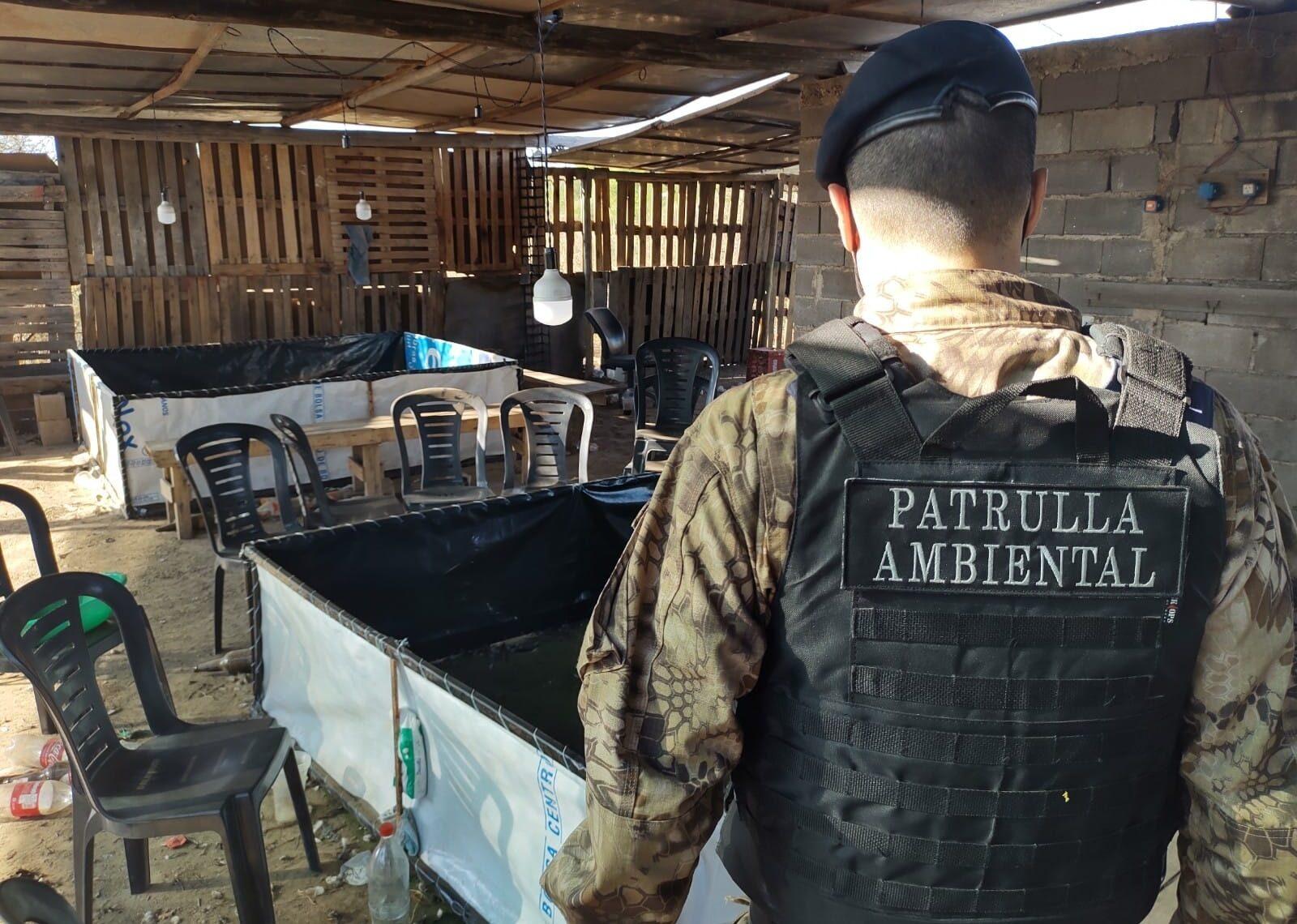 Córdoba: detenidos y secuestros por riña de gallos